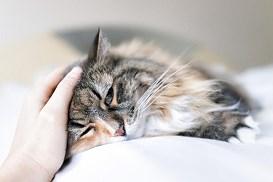 9 najczęściej spotykanych chorób u kotów