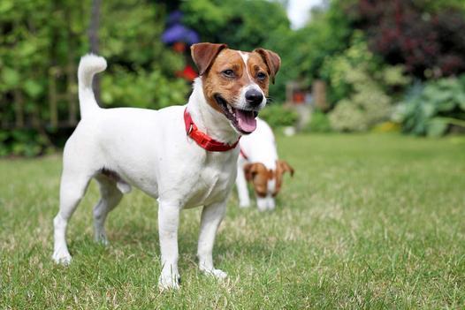 Ogródek nie równa się spacerowi, czyli dlaczego psy muszą wychodzić na dłuższy spacer?