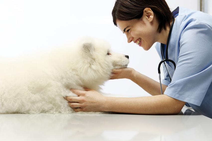 Pies u weterynarza, a także kastracja psa i porady, kiedy kastrować psa
