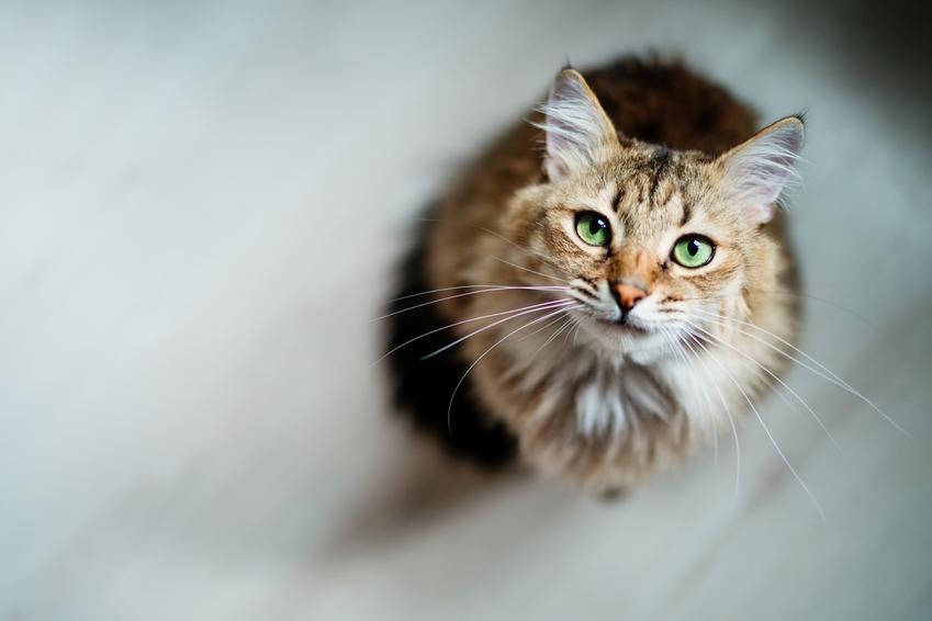 Kot siedzący na podłodze w domu, a także informacje ile żyją koty i jaka jest średnia długość życia