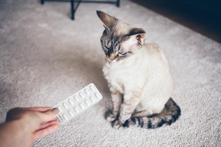 Kot siedzący na dywanie i tabletki, a także tabletki uspokajające dla kota i rodzaje