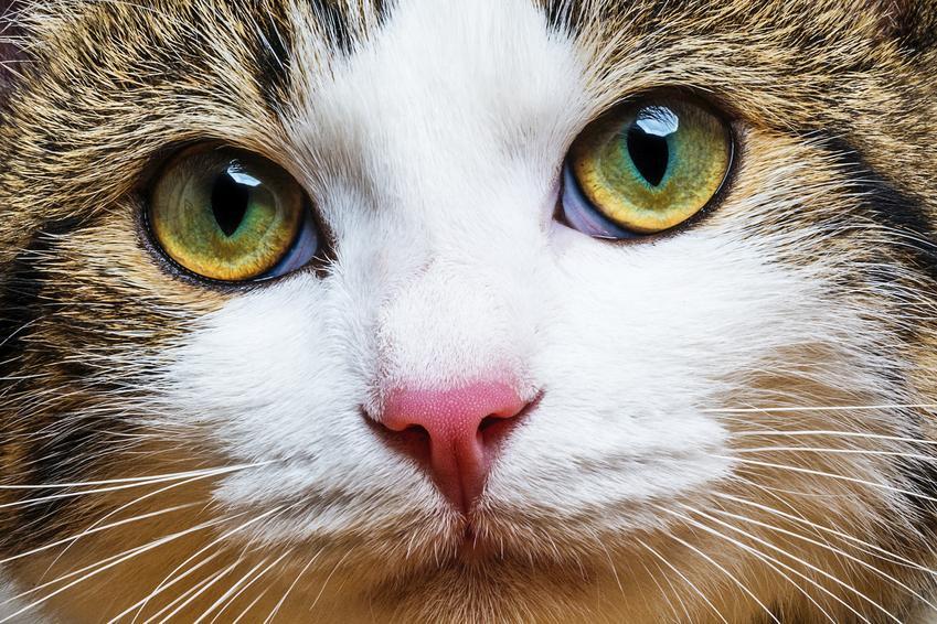 Zbliżenie na oczy kota, a także informacje, czy koty widzą kolory i w ciemności