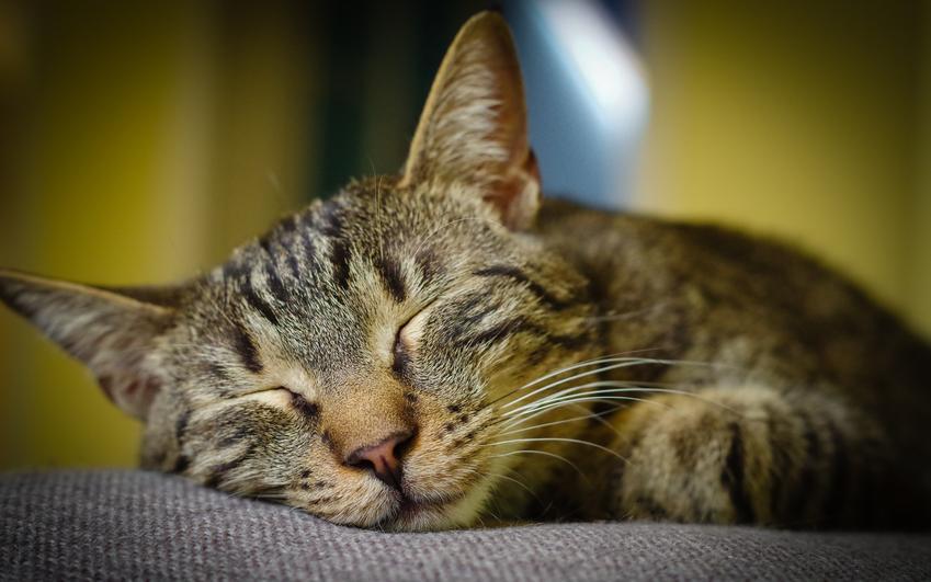 Śpiący kot, a także informacje, ile śpi kot na dobę i co warto wiedzieć