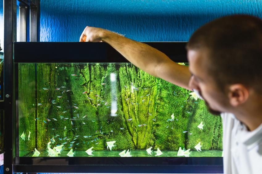 Mężczyzna przy akwarium, a także glony nitkowate i porady jak zwalczać glony
