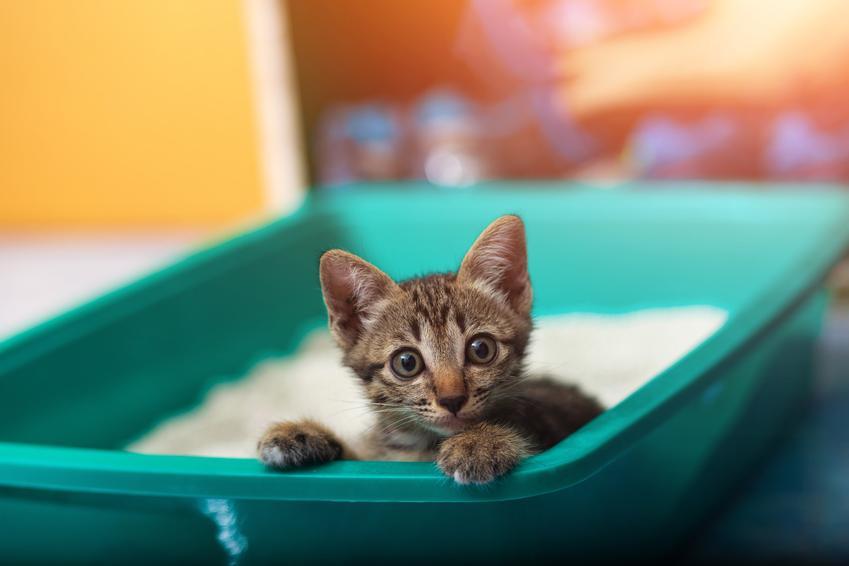 Mały kotek siedzący w zielonej kuwecie, a także porady, jak nauczyć kota korzystać z kuwety