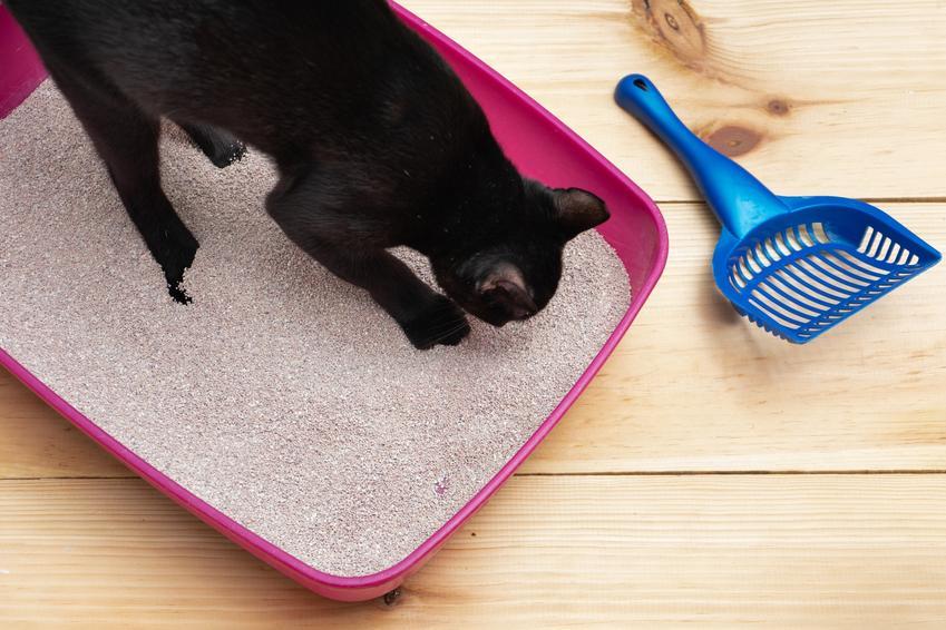 Czarny kot siedzący w różowej kuwecie, a także praktyczne porady, jak nauczyć kota korzystać z kuwety