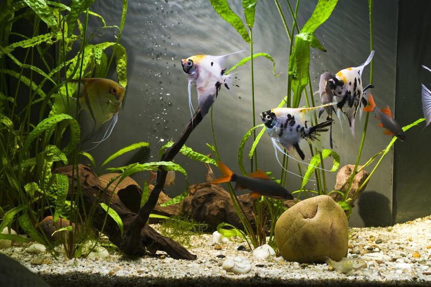 Akwarium z rybkami, a także polecane filtry akwariowe, rodzaje i cena filtra do akwarium