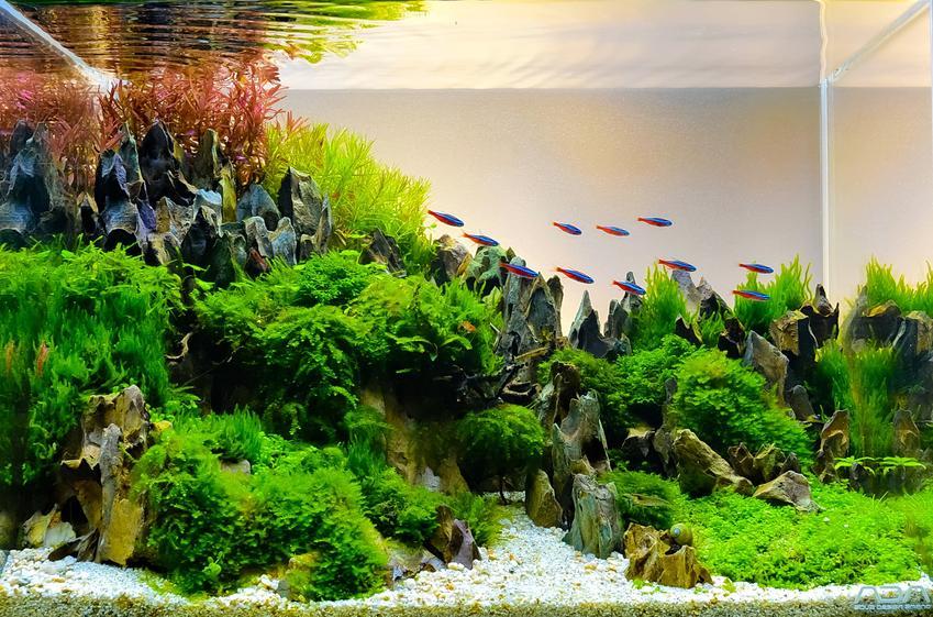 Piękne i czyste akwarium, a także jak wyklarować wodę w akwarium i mętna woda w akwarium