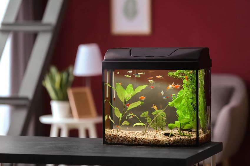 Małe akwarium w mieszkaniu, a także parametry wody w akwarium i porady