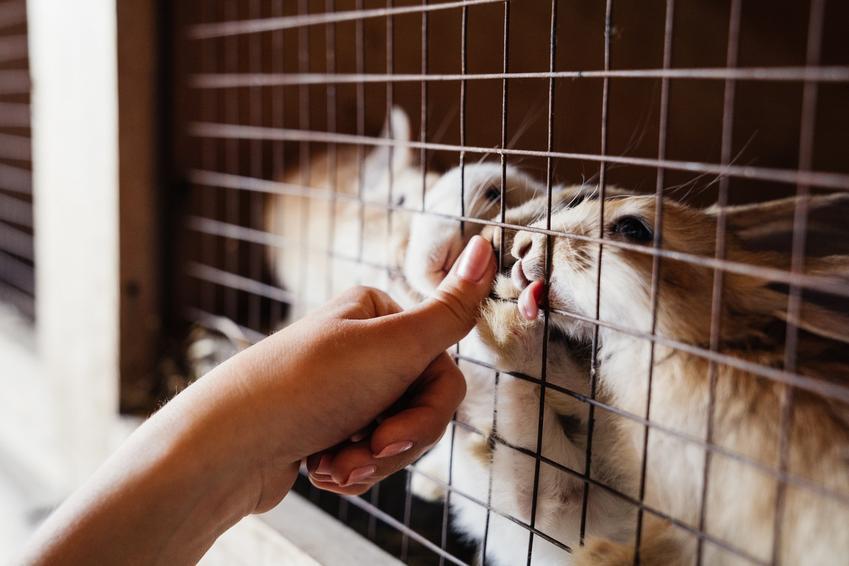 Króliki w klatce, a także porady i projekty, jak zrobić klatkę dla królika