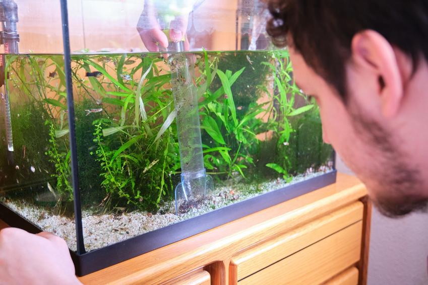 Mężczyzna zaglądający do akwarium, a także pompka do akwarium i polecane pompki akwariowe