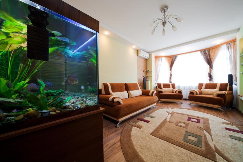 Akwarium na tle przestronnego salonu, a także lampa uv do akwarium i jej cena