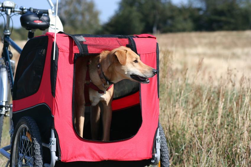 Pies w czerwonej przyczepce rowerowej na tle pola oraz przyczepka rowerowa dla psa i jej cena