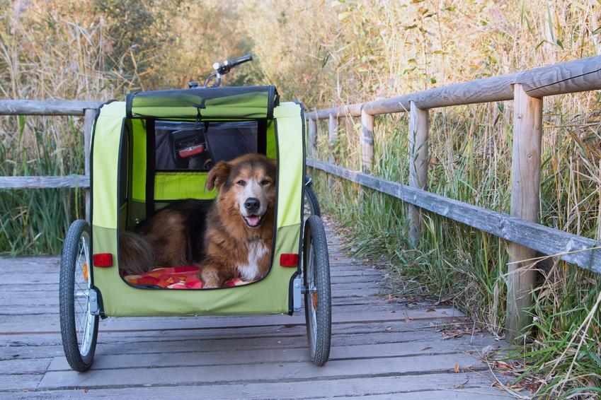 Pies w zielonej przyczepce rowerowej na tle pola oraz przyczepka rowerowa dla psa i jej cena