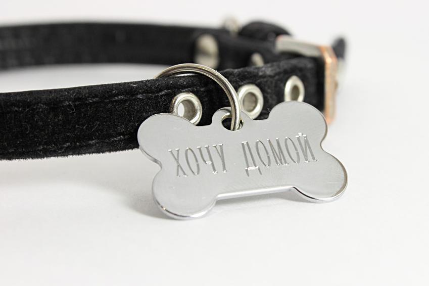 Adresowa zawieszka dla psa z imieniem na czarnej obroży, a także rodzaje i porady