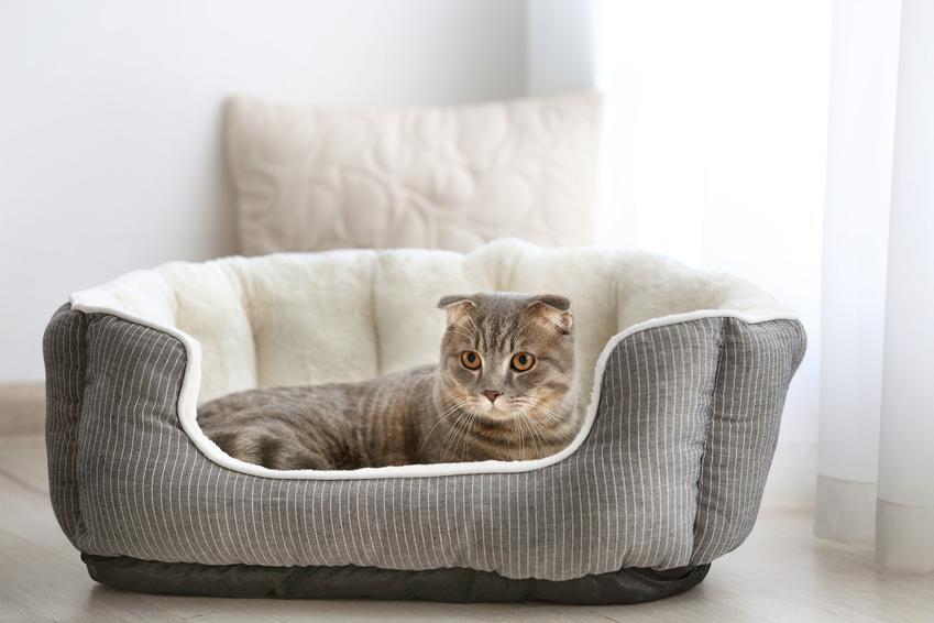 Kot śpiący na posłaniu, a także polecane posłanie dla kota i legowisko dla kota