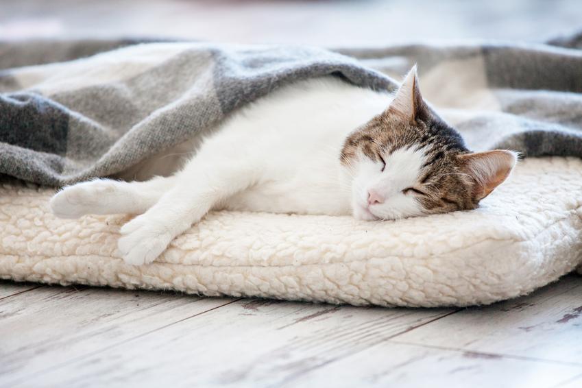 Kot na legowisku, a także polecane posłanie dla kota i legowisko dla kota