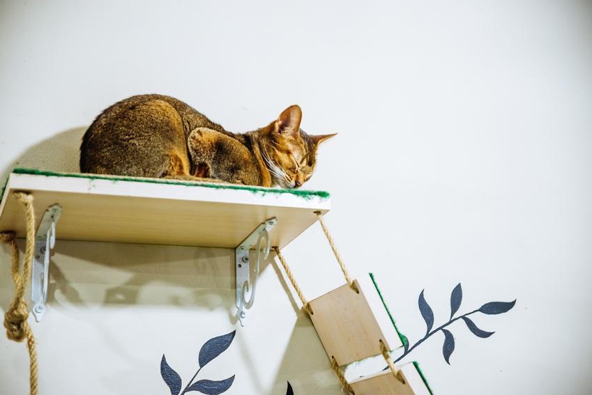 Kot leżący na półce ściennej, a także polecane półki dla kota, rodzaje i ceny