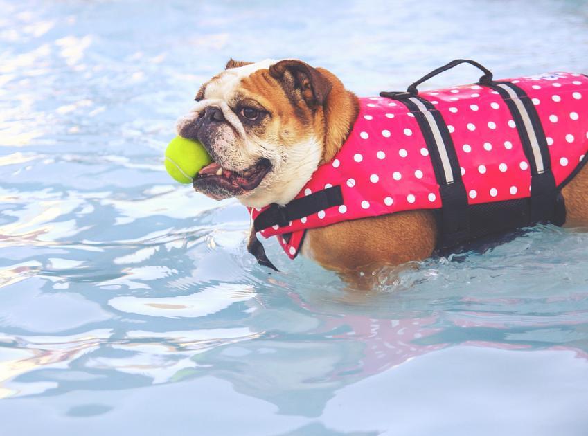 Pies w kamizelce w wodze z piłką oraz kamizelka dla psa, cena i porady