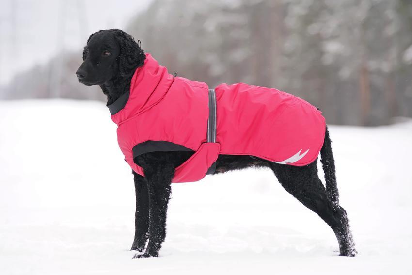 Duży pies w kurtce zimowej, a także kurtka zimowa dla psa, kurtki zimowe dla psów