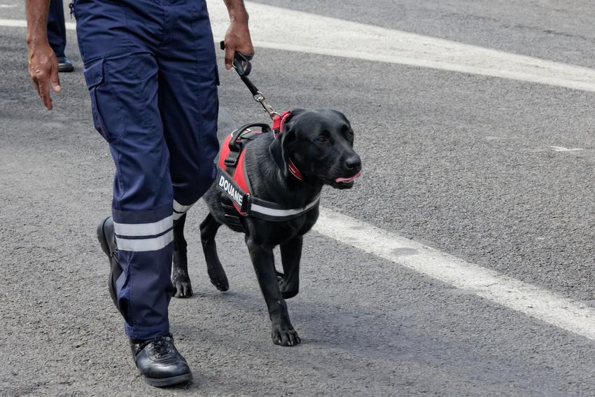 Duży pies na smyczy podczas spaceru, a także smycz dla dużego psa, rodzaje i cena