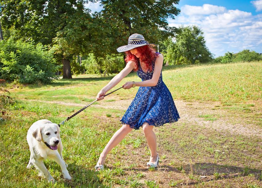 Kobieta podczas spaceru z psem, który ciągnie smycz oraz dlaczego pies ciągnie na smyczy