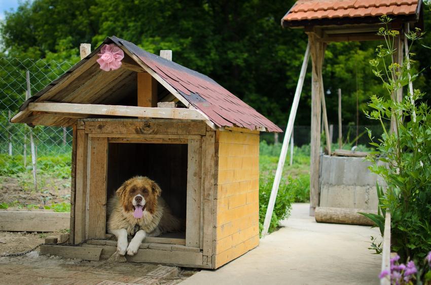 Duży pies w budzie, a także buda dla dużego psa, rodzaje, porady i cena