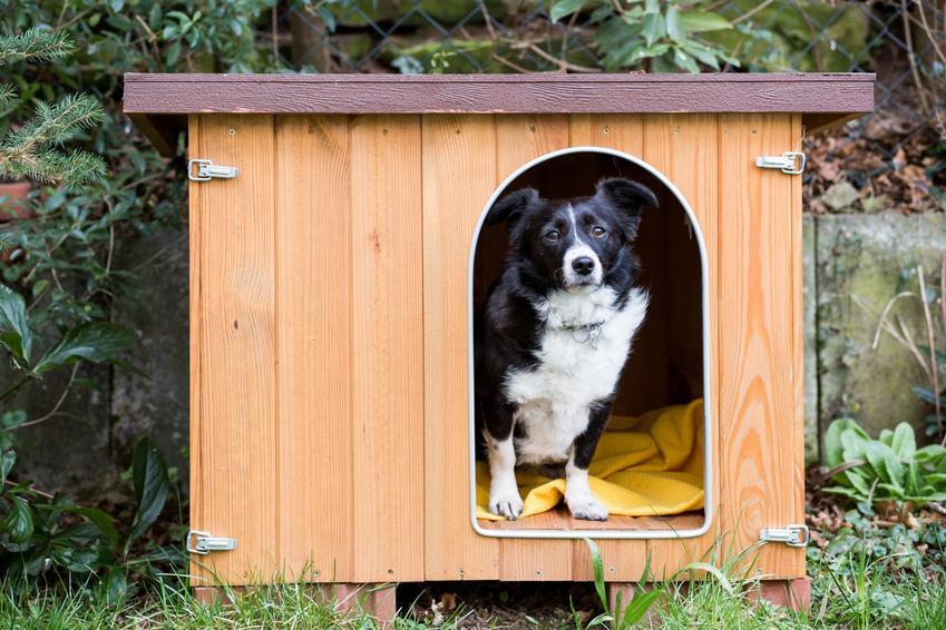 Pies siedzący w budzie, a także buda dla dużego psa, cena i rodzaje