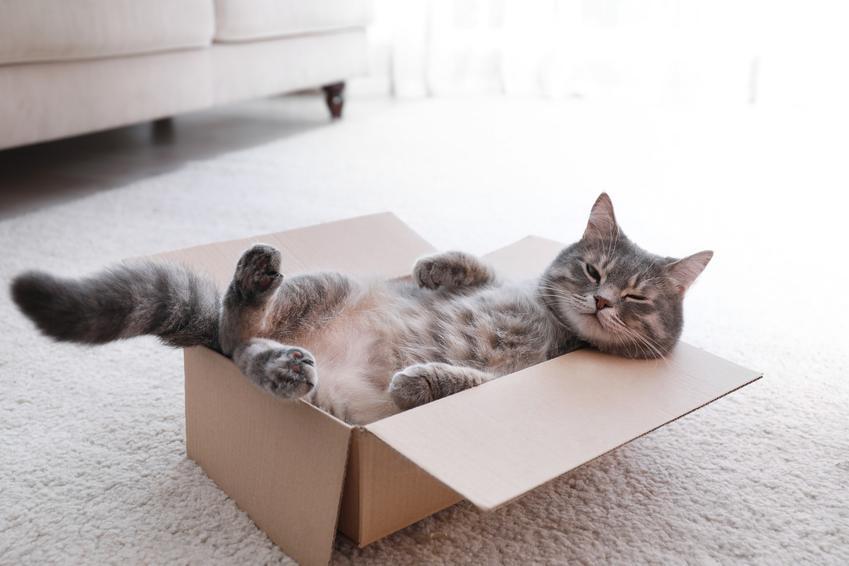 Kot bawiący się w kartonowym pudełku, a także inspiracje na imiona dla kota