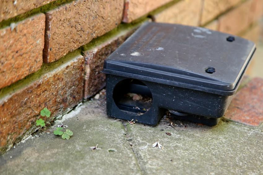 Karmnik deratyzacyjny pod domem, czyli szczury, deratyzacja i sposoby