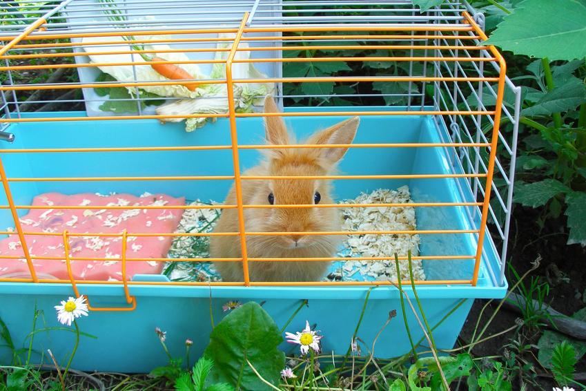 Królik miniaturka w kltace, a także polecana klatka dla królika miniaturki i cena