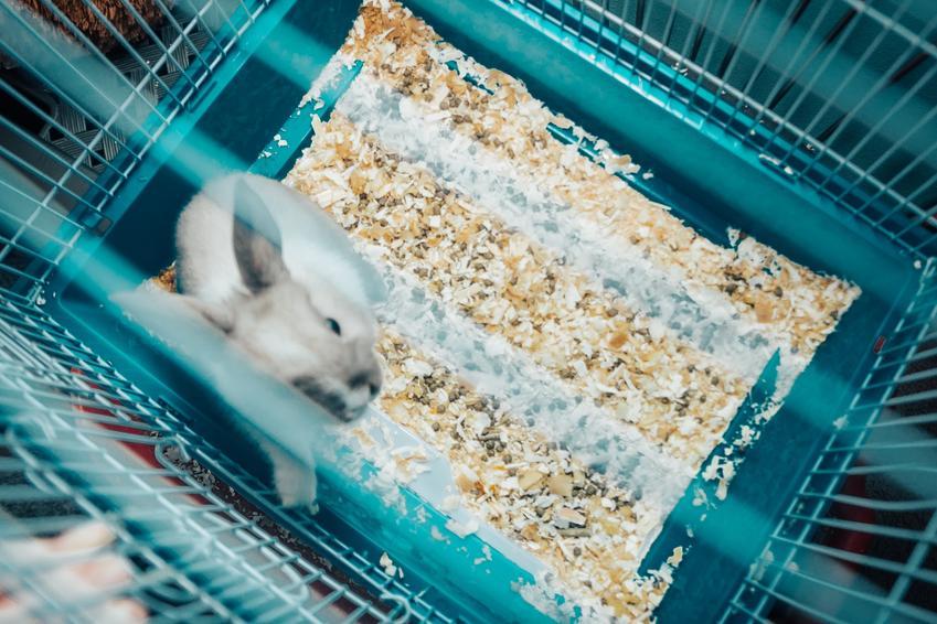 Królik w klatce z lotu ptaka, a także klatka dla królika miniaturki, modele i cena