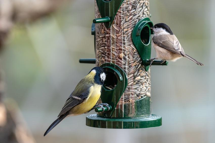 Ptaki przy karmniku zimujące w Polsce, a także pokarm dla ptaków, porady i cena