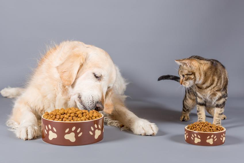 Pies i kot jedzący z misek, a także Karma Dolina Noteci dla zwierząt i jej rodzaje