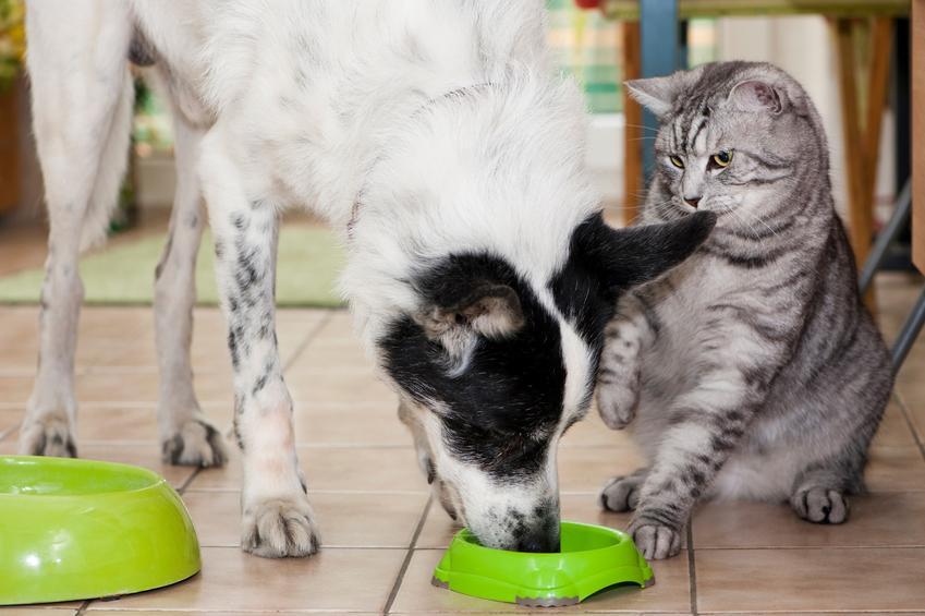 Pies jedzący z miski i patrzący na niego kot oraz Karma Dolina Noteci, rodzaje i cena