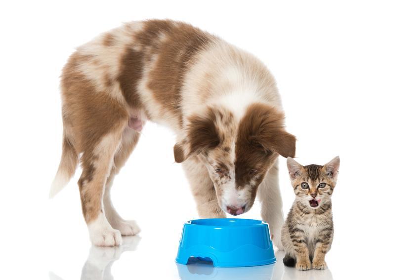 Pies i kot jedzący z miski na białym tle, a także taste of the wild dla zwierząt i jej rodzaje