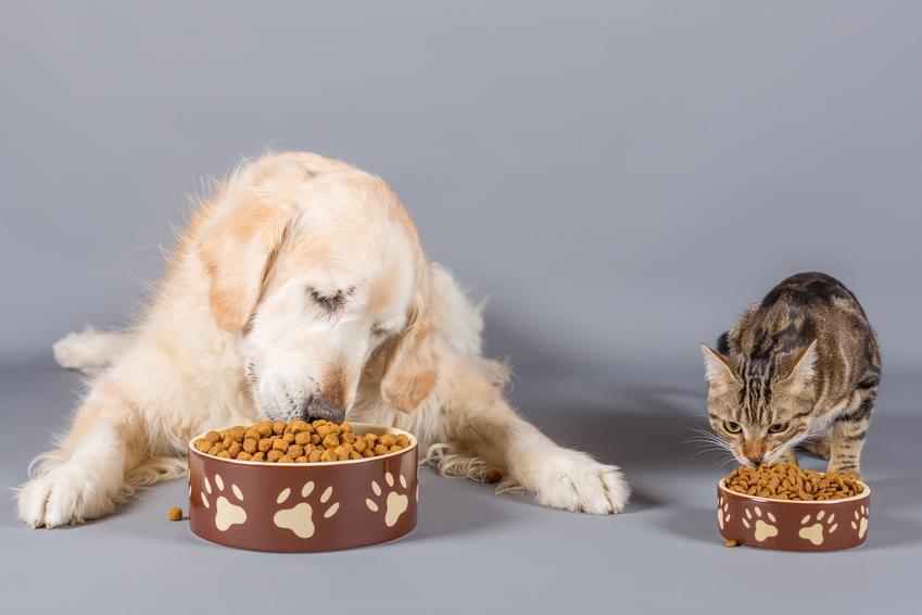 Pies i kot jedzący z miski oraz taste of the wild, rodzaje i cena