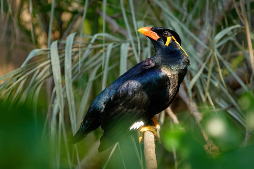 Ptak gwarek na tle zieleni, a także inne ciekawe gatunki ptaków występujących w Polsce