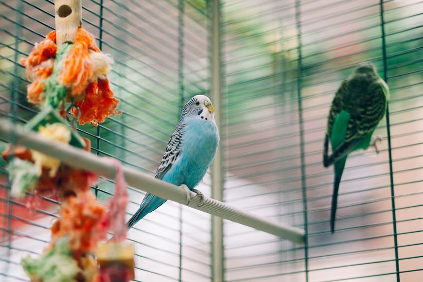 Kolorowe ptaki w klatce, a także woliera dla ptaków i polecane woliery dla ptaków