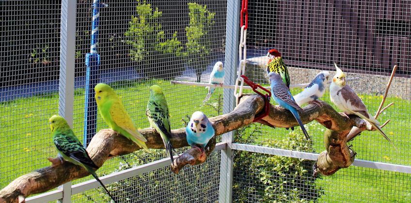 Zewnętrzna woliera dla ptaków na tle trawnika, a także polecane woliery dla ptaków