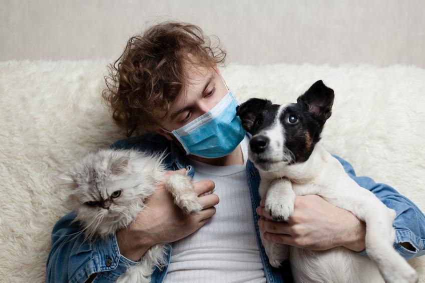 Pies i kot z właścicielem w maseczce, a także koronawirus u psa i u kota