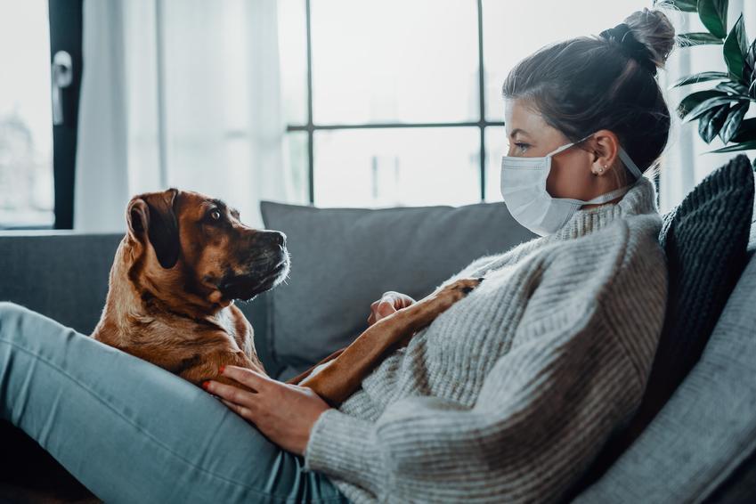 Pies na kolanach właścicielki w maseczce oraz koronawirus u psa i u kota oraz objawy