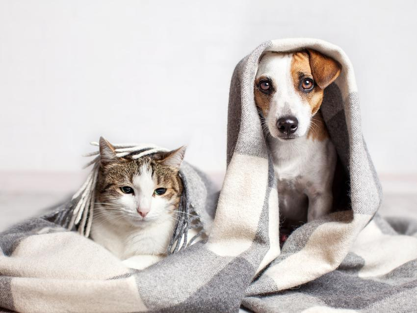 Kot i pies pod kocem, a także koronawirus jelitowy u psa i u kota oraz objawy i leczenie