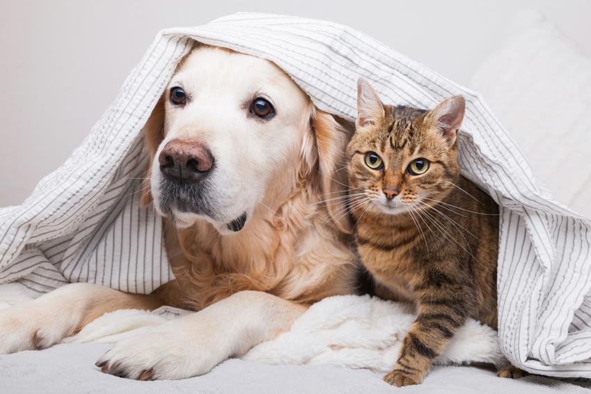 Kot i pies pod kocem, a także koronawirus jelitowy, koronawiroza u psa i u kota oraz objawy i leczenie