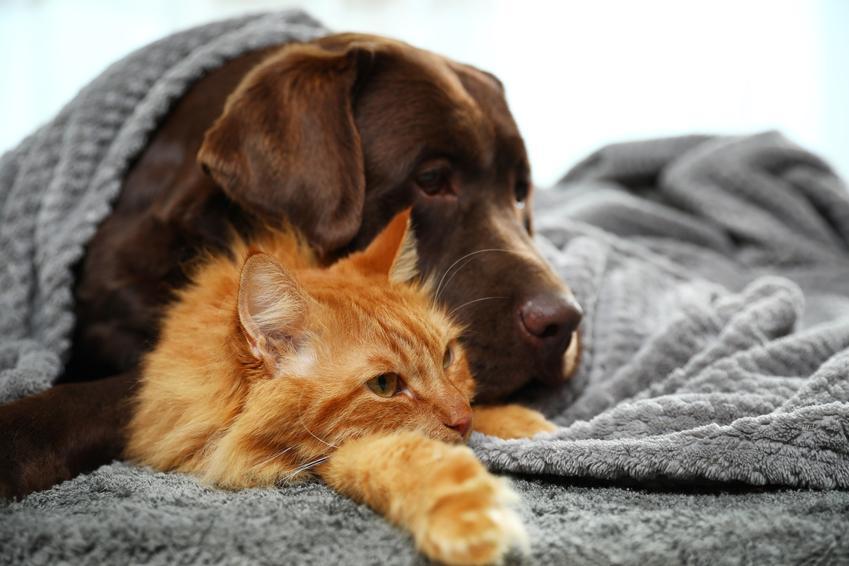 Pies i kot pod kocem w domu oraz koronawiroza i koronawirus jelitowy, objawy i leczenie
