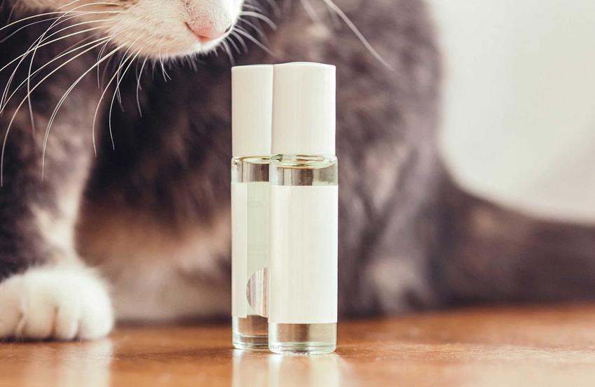 Kot wąchający zapach feromonów dla kota w szklanych buteleczkach.