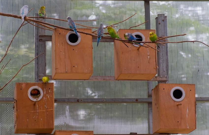 Budki lęgowe dla papug zrobione samodzielnie z drewna. Porady i ceny budek dla papug.