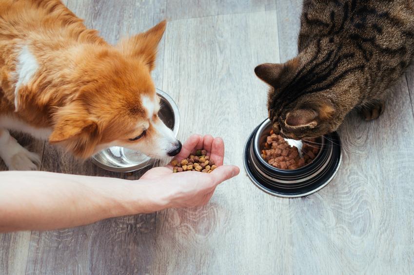 Pies i kot przy misce z karmą, a także karma dla psa i dla kota Versele Laga, jej rodzaje i dawkowanie