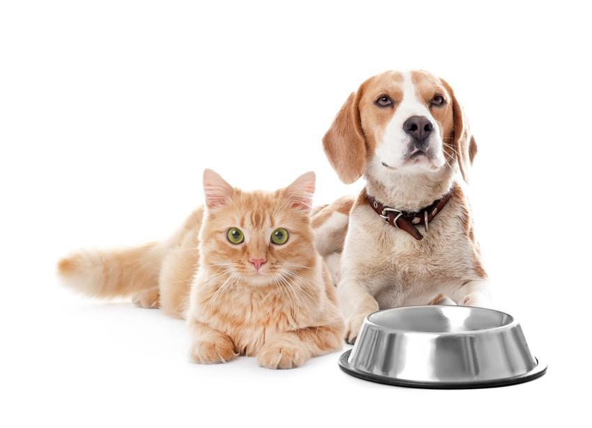 Pies i kot pzy misce na karmę oraz karma dla psa i dla kota Versele Laga, jej rodzaje i skład