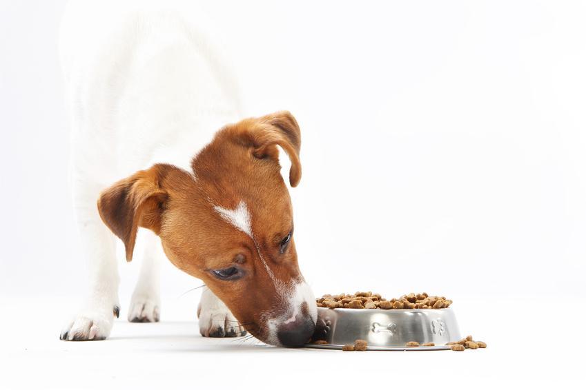 Pies przy misce z karmą, a także karma ZiwiPeak, jej skład, dawkowanie, rodzaje i cena